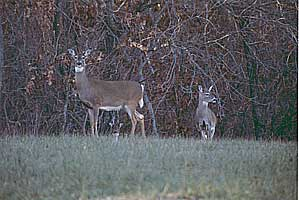 lake of the ozarks, missouri hunting reserves